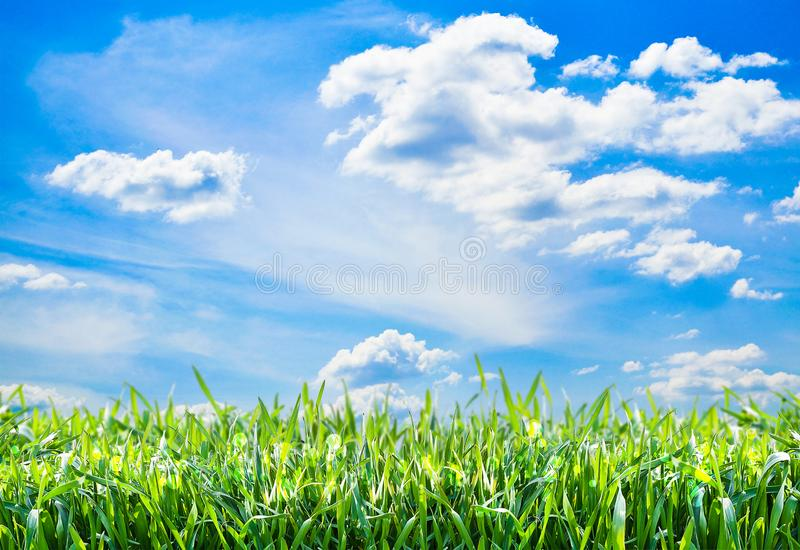 Fundo natural com grama verde e o céu azul fotografia de stock