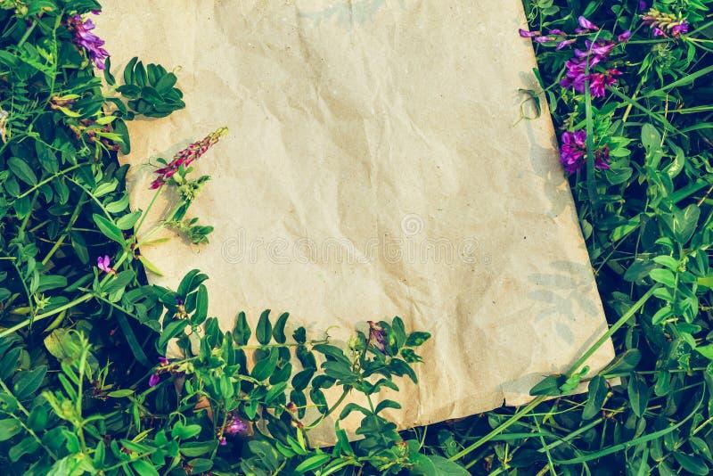 Fundo natural criativo das plantas e do papel do ofício O conceito de materiais eco-amigáveis fotografia de stock
