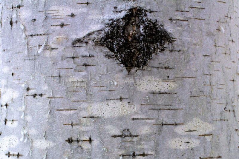 Fundo natural da casca de vidoeiro com textura natural do vidoeiro foto de stock