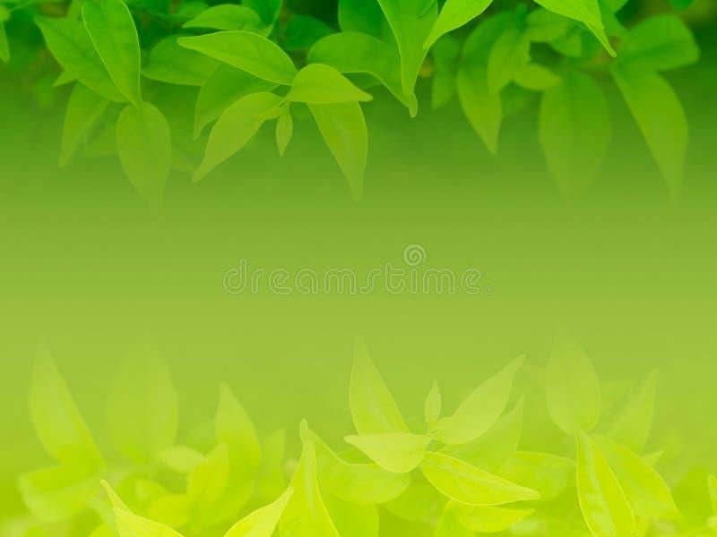 Fundo natural da folha verde fotos de stock