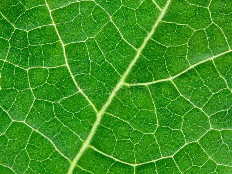 Fundo natural da licença verde fotografia de stock royalty free