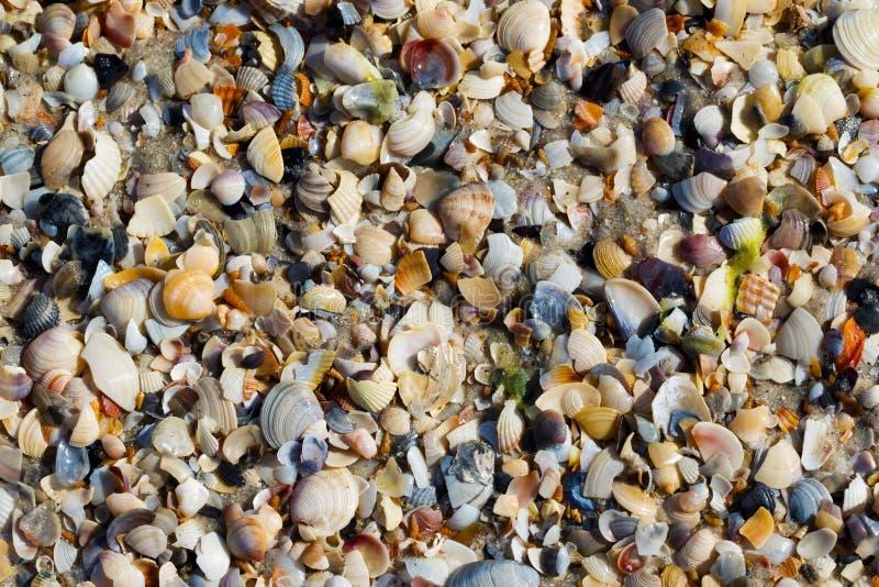 Fundo natural de conchas do mar quebradas na praia molhada da areia fotos de stock royalty free