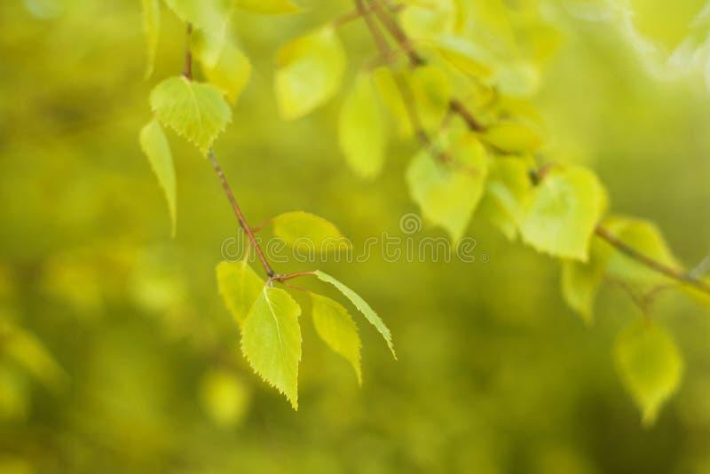 Fundo natural Defocused da floresta do outono no dia ensolarado imagem de stock royalty free