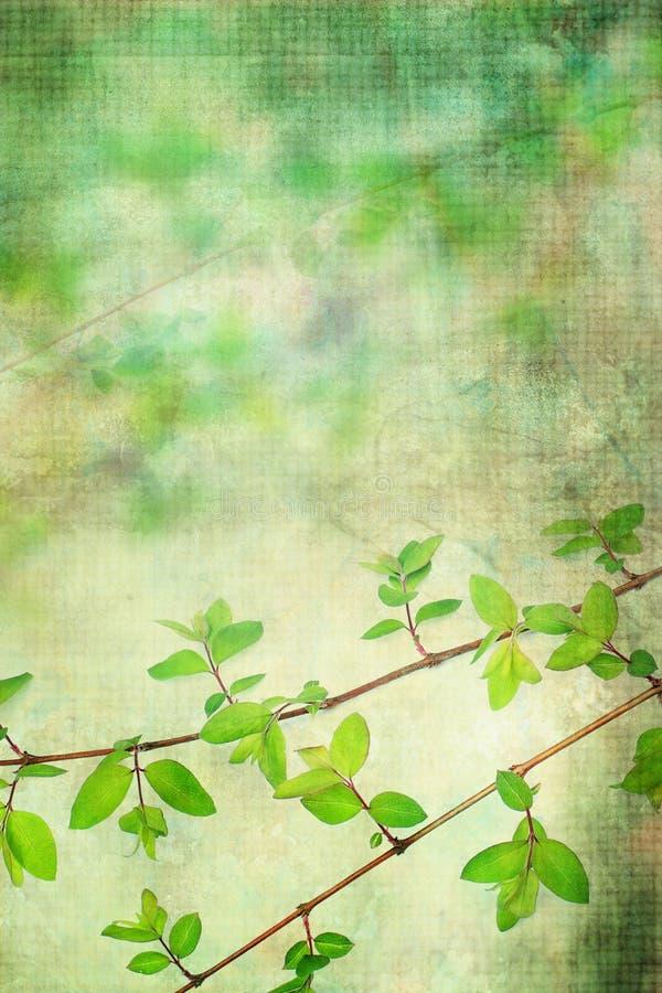 Fundo natural do grunge das folhas ilustração stock