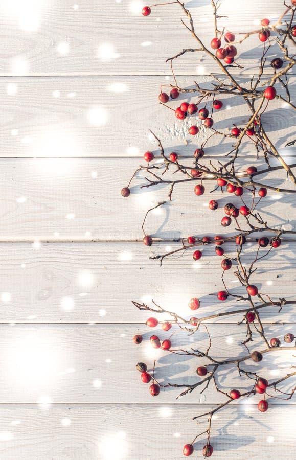 Fundo natural do inverno Espinho vermelho e madeira branca fotos de stock