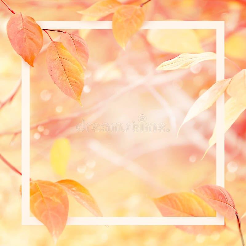 Fundo natural do outono delicado delicado com quadro Rosa e folhas amarelas na floresta do outono imagens de stock