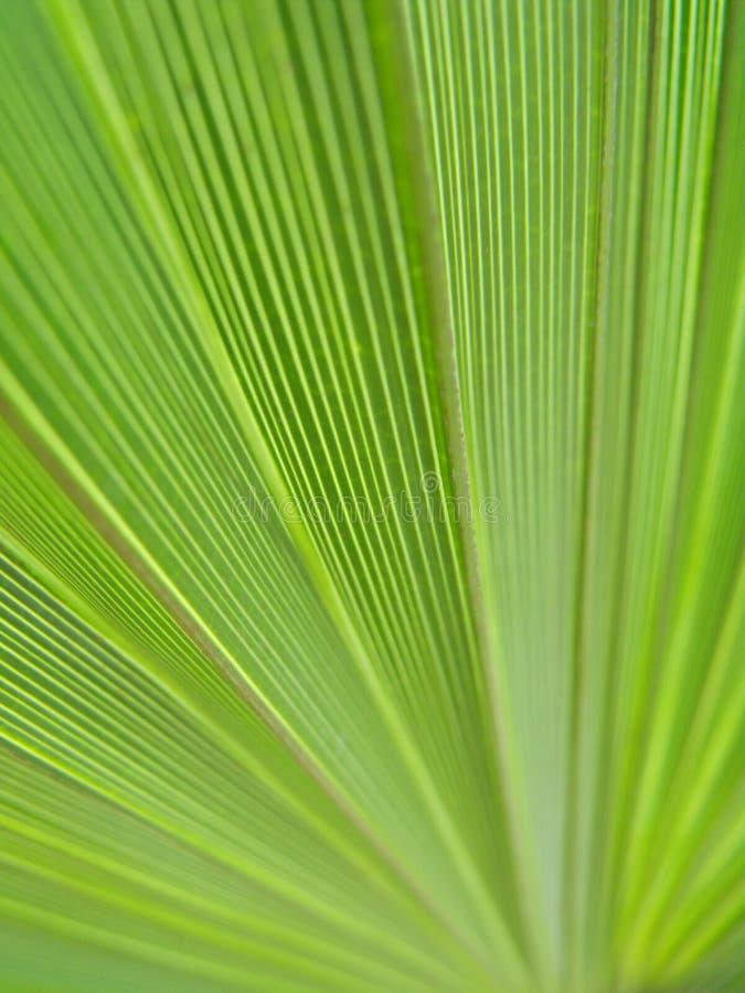 Fundo natural do verde em folha de palmeira do detalhe foto de stock
