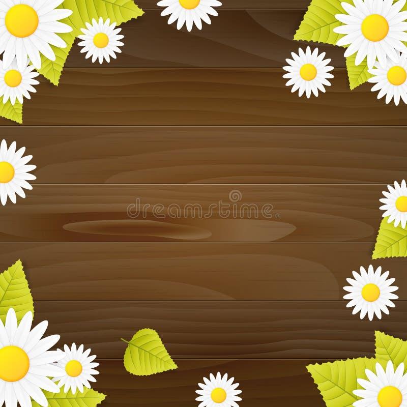 Fundo natural do vetor do vood da mola com flor da margarida ilustração royalty free