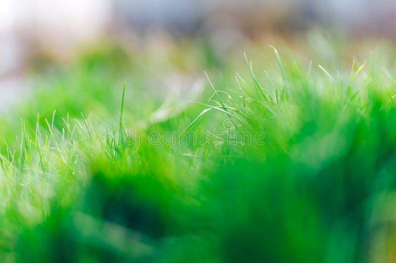 Fundo natural fresco do sumário da grama verde e do bokeh borrado beleza Fim do foco seletivo acima para abstrato borrado imagem de stock