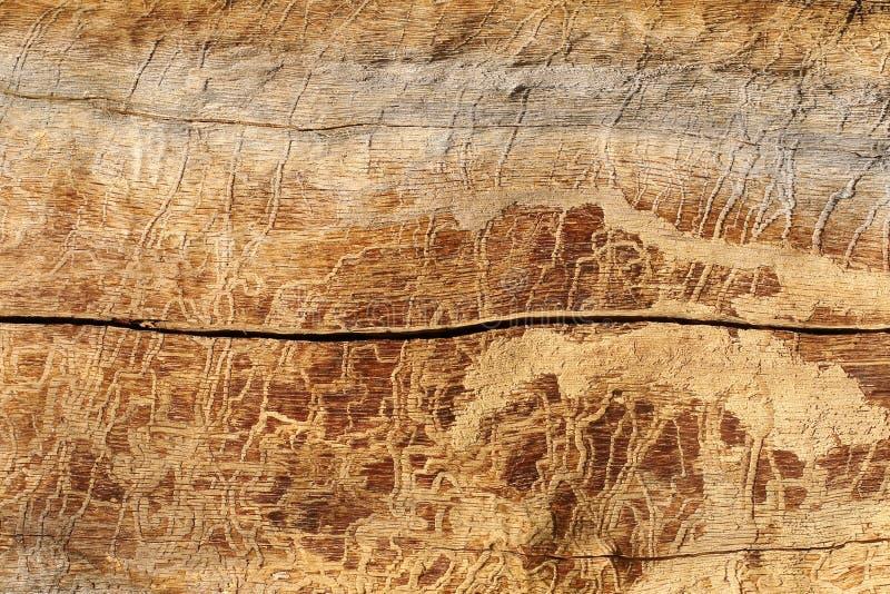 Fundo natural Madeira de pinho afetada por insetos e por fenômenos atmosféricos em circunstâncias naturais imagens de stock royalty free