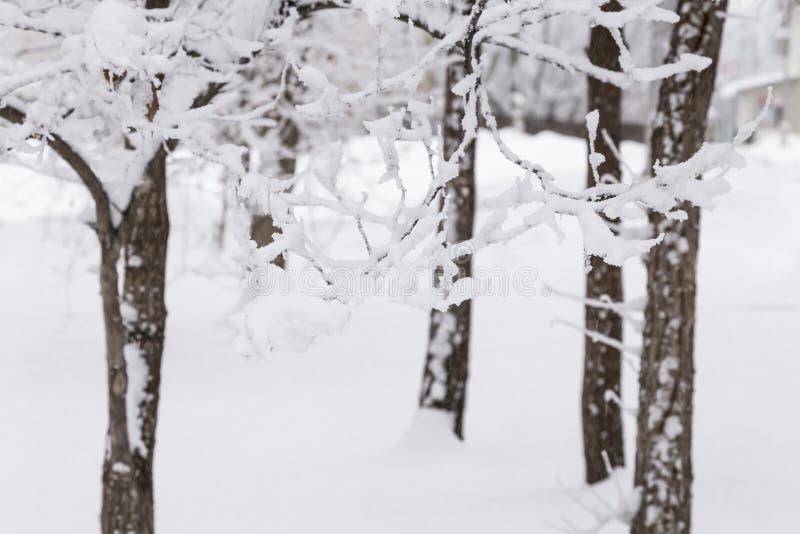 Fundo natural, paisagem Dia gelado do inverno frio Tempo da neve, circunstâncias climáticas em janeiro, dezembro e fevereiro Árvo imagens de stock