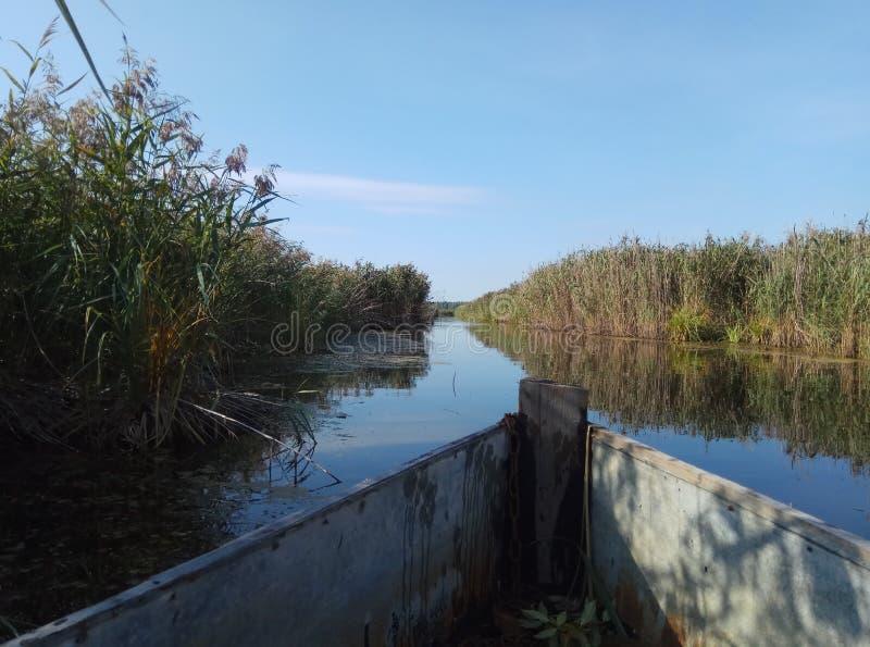 Fundo natural Rússia do rio bonito azul e da grama amarela velha de madeira do verde do céu azul do barco fotos de stock
