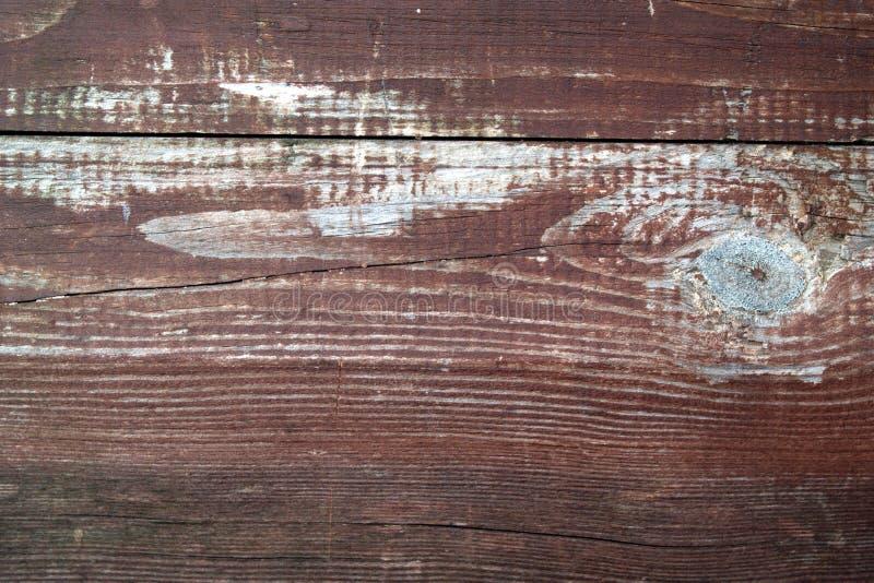 Fundo natural velho da árvore foto de stock