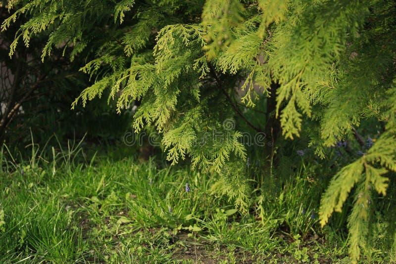 Fundo natural verde detalhado altamente foto de stock