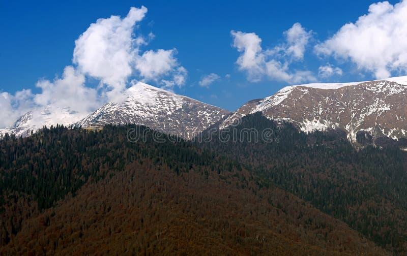 Fundo nevoento da opinião aérea de Autumn Coniferous Forest Landscape imagens de stock royalty free