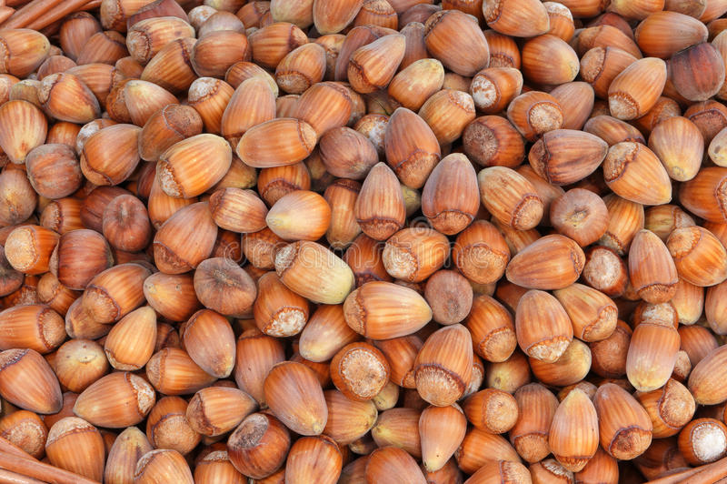 Fundo Nuts. Grupo das avelã. foto de stock royalty free