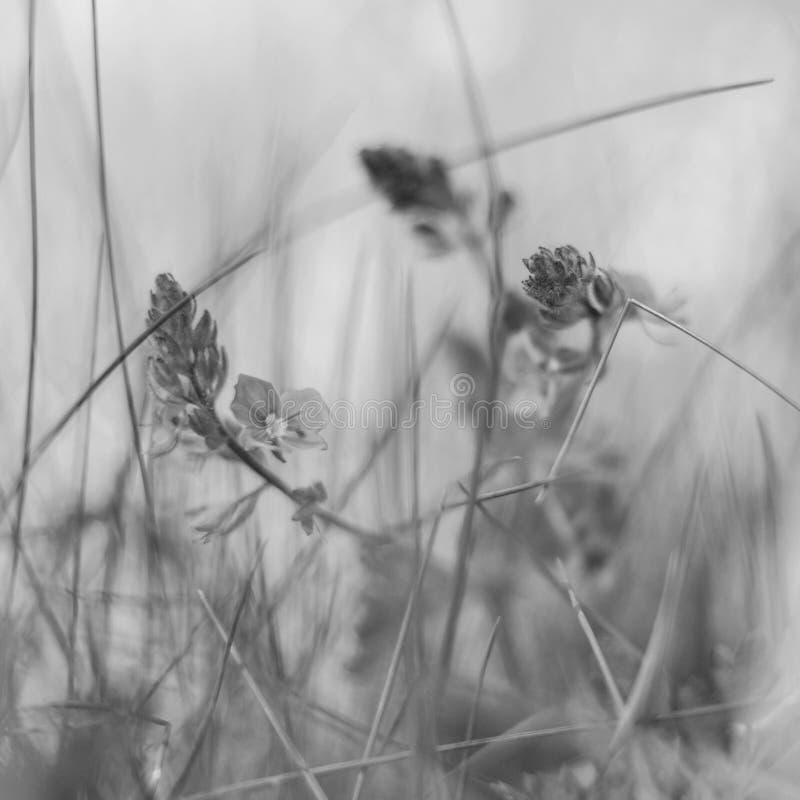 Fundo obscuro por muitos flor selvagem no campo na manhã imagem de stock