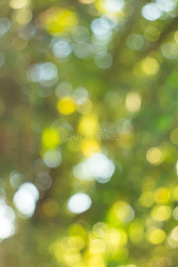 Fundo obscuro verde abstrato do bokeh - a floresta pequena do bokeh imagem de stock royalty free
