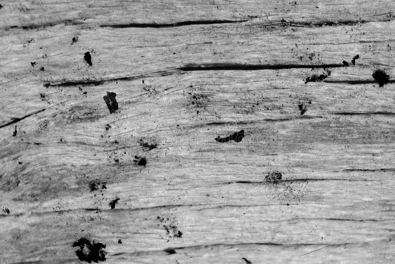 Fundo orgânico da textura da madeira lançada à costa podre do Grunge imagem de stock