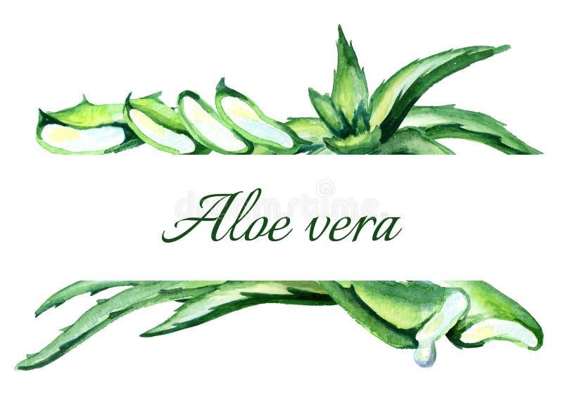 Fundo orgânico de vera do aloés watercolor ilustração do vetor