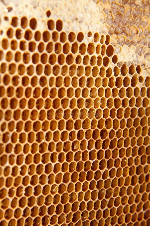 Fundo ou textura do pente do mel imagens de stock