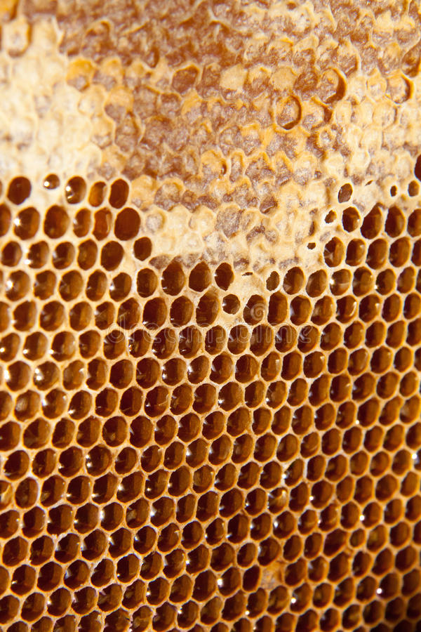 Fundo ou textura do pente do mel imagem de stock royalty free