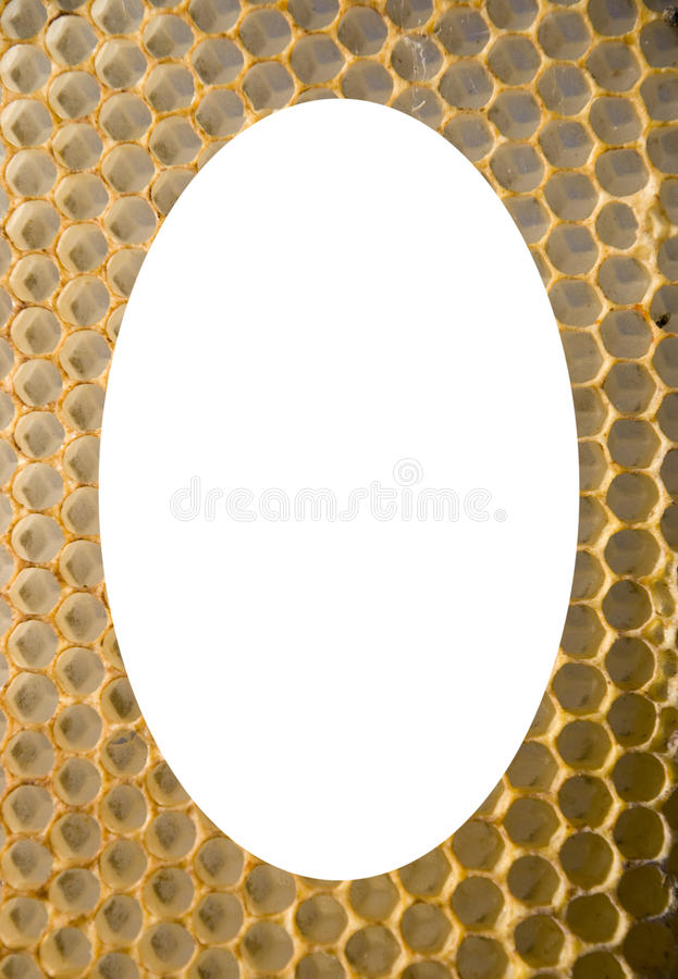 Fundo oval branco isolado do engranzamento do favo de mel foto de stock royalty free
