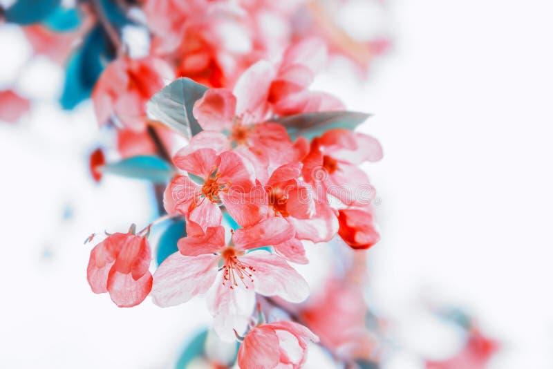 Fundo pastel floral bonito da natureza imagens de stock