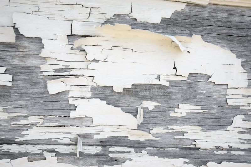 Fundo pealing branco da pintura fotos de stock