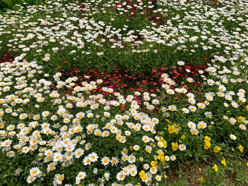 Fundo pequeno das flores fotos de stock