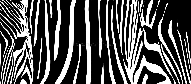 Fundo por zebras ilustração stock