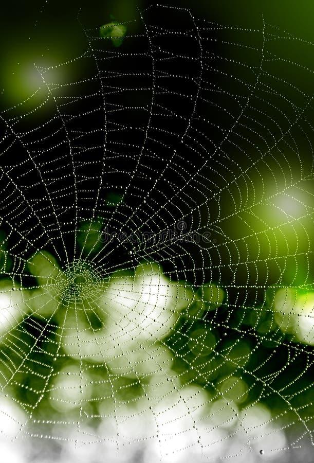 fundo Preto-verde com gotas da água em uma Web fotos de stock royalty free