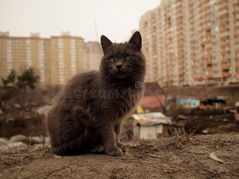 Fundo residental cinzento do gato e do degradado e da cidade moderna foto de stock
