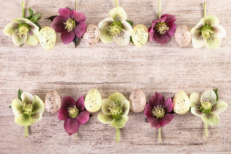 Fundo retro de Easter Quadro com as flores roxas e brancas da mola do hellebore ou da rosa quaresmal fotografia de stock royalty free