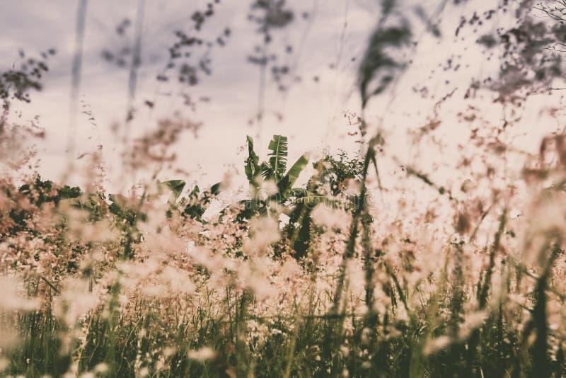 Fundo romântico e poético do campo de flor foto de stock
