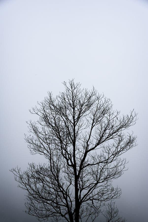 Fundo só preto e branco dos ramos de árvore do teste padrão da abstração imagem de stock