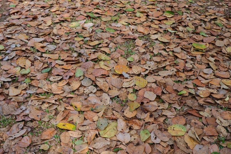 Fundo seco da textura da folha foto de stock