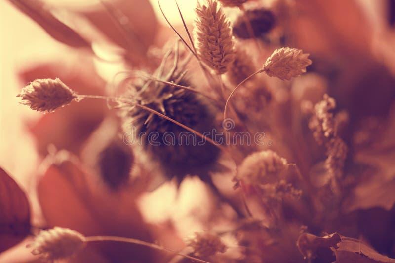 Fundo seco das flores foto de stock royalty free