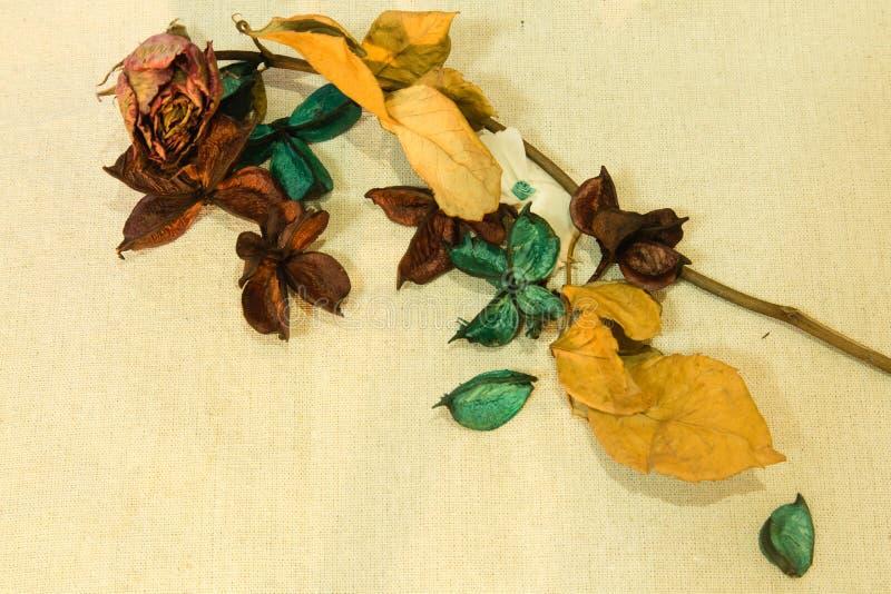 Fundo seco das flores imagem de stock royalty free