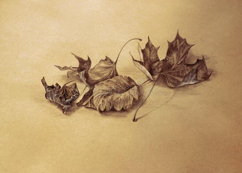 Fundo seco do desenho de lápis das folhas de outono ilustração royalty free