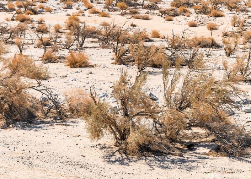 Fundo seco do deserto para desenhistas em Califórnia do sul EUA imagens de stock