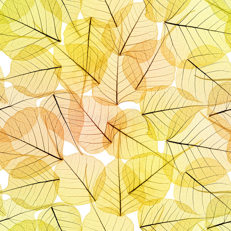 Fundo sem emenda - Autumn Leaves Pattern fotografia de stock