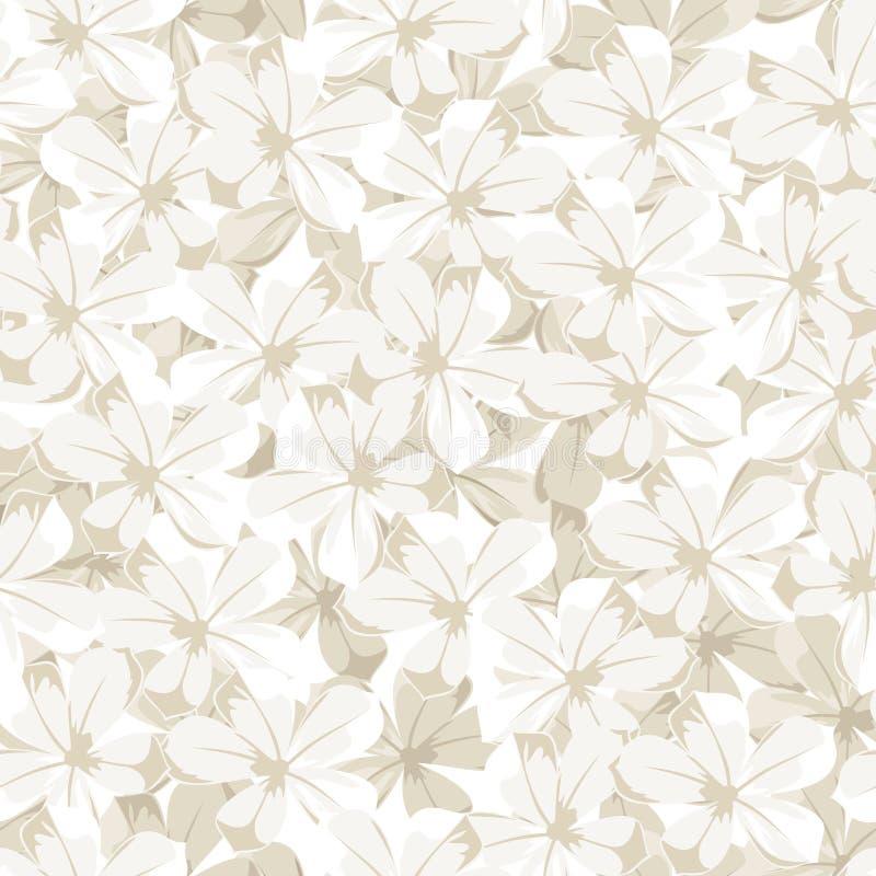 Fundo sem emenda com flores brancas. Mal do vetor ilustração royalty free