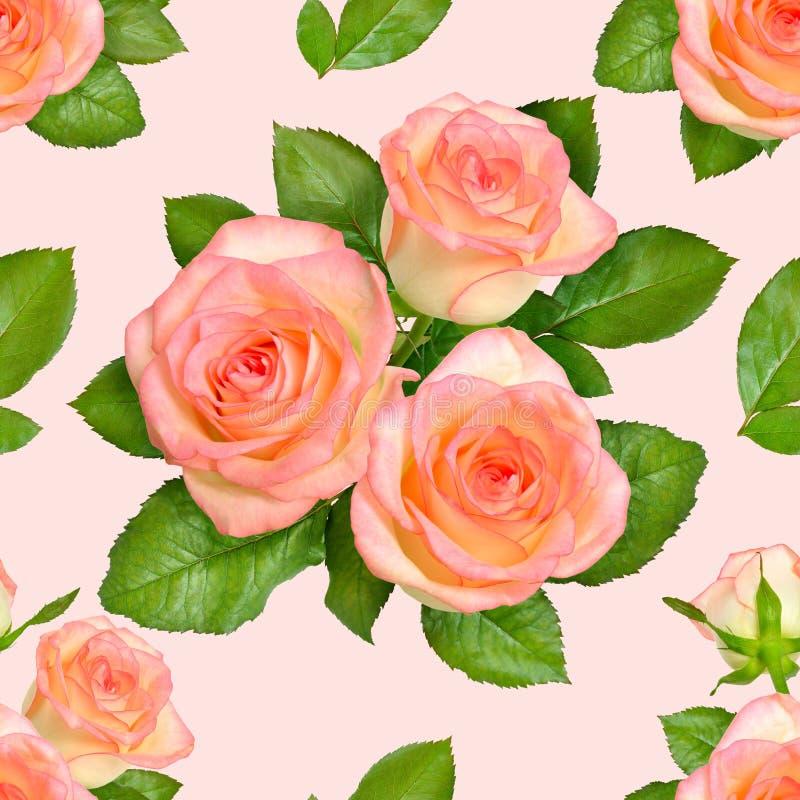 Fundo sem emenda com rosas cor-de-rosa ilustração royalty free