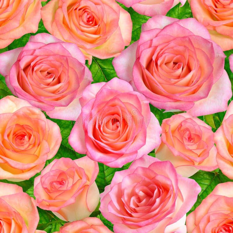 Fundo sem emenda com rosas cor-de-rosa imagens de stock royalty free