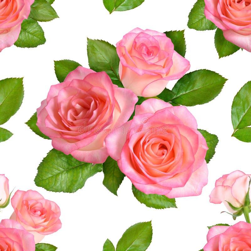 Fundo sem emenda com rosas cor-de-rosa Isolado no backgroun branco ilustração royalty free