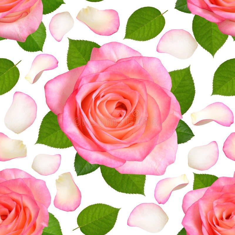 Fundo sem emenda com rosas e as pétalas cor-de-rosa ilustração royalty free