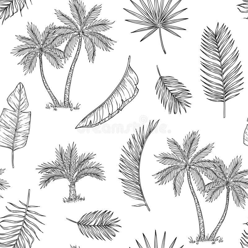 Fundo sem emenda da palmeira Palma de coco tropical, ilha exótica Mão do vintage que tira o vetor floral abstrato do verão ilustração do vetor