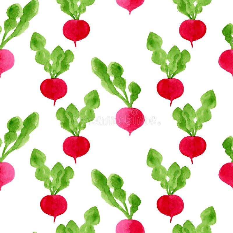 Fundo sem emenda do teste padrão da aquarela com rabanete Ilustração tirada mão do alimento da dieta do eco Vegetais saborosos is ilustração stock