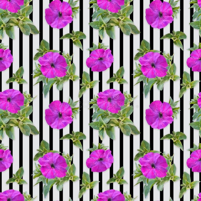 Fundo sem emenda, teste padrão com as flores do petúnia cor-de-rosa em um fundo de listras escuras fotografia de stock royalty free
